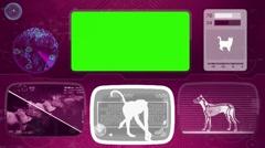 gelada - ape - monkey - Bone scanning  - Animal Monitor  - World search - pur - stock footage