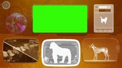 Gorilla - monkey - Bone scanning  - Animal Monitor  - World search - orange - stock footage