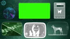 Panda - Bone scanning  - Animal Monitor  - World search - green Stock Footage