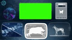 Warthog - boar - pig - Bone scanning  - Animal Monitor  - World search - blue Stock Footage