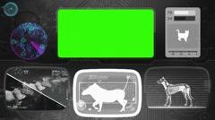 Warthog - boar - pig - Bone scanning  - Animal Monitor  - World search - grey Stock Footage