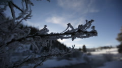 Snowy branch, winter scenery close up Stock Footage