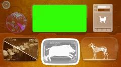 Warthog - boar - pig - Bone scanning  - Animal Monitor  - World search - oran Stock Footage
