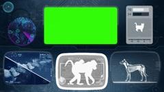 ape - baboon - monkey - Bone scanning  - Animal Monitor  - World search - blu - stock footage