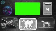 ape - baboon - monkey - Bone scanning  - Animal Monitor  - World search - gre - stock footage