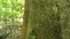 Ant colony moving leaves on tree trunk Stock Footage