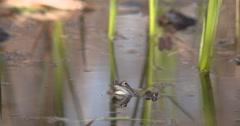 One Moor Frog is waiting 4K, UHD Stock Footage