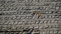 The wooden shake shingles on the roof Stock Footage