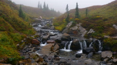 Paradise Falls Creek\ Mt Rainier National Park 4k Stock Footage