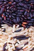 Wild gold and red dry rice closeup Stock Photos