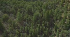 WS AERIAL Tree area with mountain in background Stock Footage