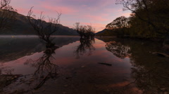 Sunrise timelapse at a Row of partly submerged willow trees at Glenorchy - stock footage