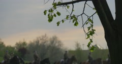 Blurred View of Horsemen in Vintage Uniform Tree's Silhouette on Foreground Stock Footage