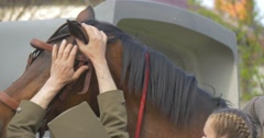 People Puts a Bridle on Horse Soldier in Uniform and Blonde Woman Calms the Stock Footage