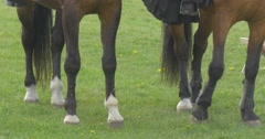 Paws of Two Horses and Hemline Dress Rider. Stock Footage