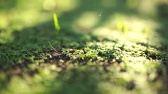 Green grass sprouts background garden. Macro shot very shallow DOF Stock Footage