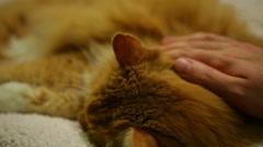 Petting a cat kitty cat pet Stock Footage