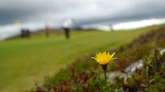 Golf Course on the outskirts of Reykjavik Stock Footage