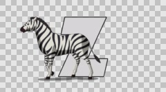 Letter Z  and  Zebra  (foreground) Stock Footage