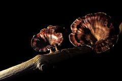 fungi mushroom on a decay tree - stock photo