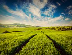 Green fields of Moravia - stock photo