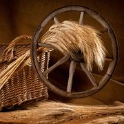 vintage still life with barley and old wheel - stock photo