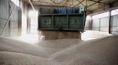 The harvest of cereals. Storage of wheat grain. Stock Footage