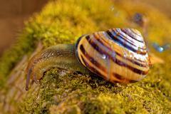 Grove snail Stock Photos