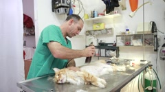 veterinar doctor at veterinary use shaving machine - stock footage