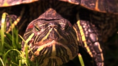 Close up of turtle head and eye, front view Stock Footage