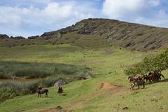 Horses grazing in the caldera of the extinct volcano Rano Raraku Stock Photos