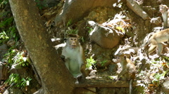 Monkeys in the forest Stock Footage
