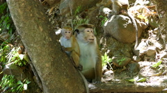 Baby and mother monkey in the forest Stock Footage