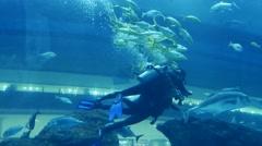 Underwater tour to the biggest aquarium in Dubai Stock Footage