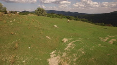 Aerial view of a mountain landscape with a pig running in nature Stock Footage