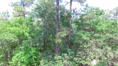 Aerial of trees in a Central Florida forest Stock Footage