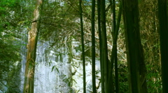 Green Bamboo on Tropical Waterfall Stock Footage