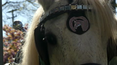 Horse head harness, spring closeup - stock footage