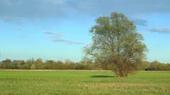 Fresh green meadow with one big tree. Stock Footage