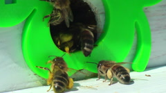 Working process of bees in beehive - stock footage