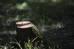Felled tree stump Stock Photos