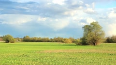 Fresh green meadow with one big tree. - stock footage