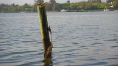 Wooden Dock Pole in Water With Barnacles Stock Footage