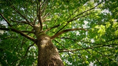 Looking Up At Tree Canopy On Sunny Day Stock Footage