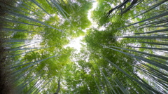 Bamboo Forest, Sagano, Arashiyama, Kyoto, Kansai region, Honshu, Japan Stock Footage