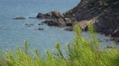 Mediterranean pine tree and seaside rocky coastline steep shore Stock Footage