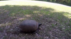 Fastest turtle in the world Stock Footage