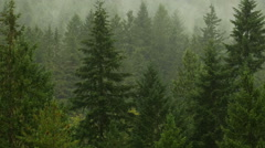 Rainy Forest Pacific Northwest Zoom Out Shot Stock Footage