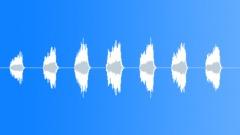 HARRIS HAWK SQUAWK Sound Effect
