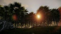 Oil Palm Tree Plantation against beautiful sunrise Stock Footage
